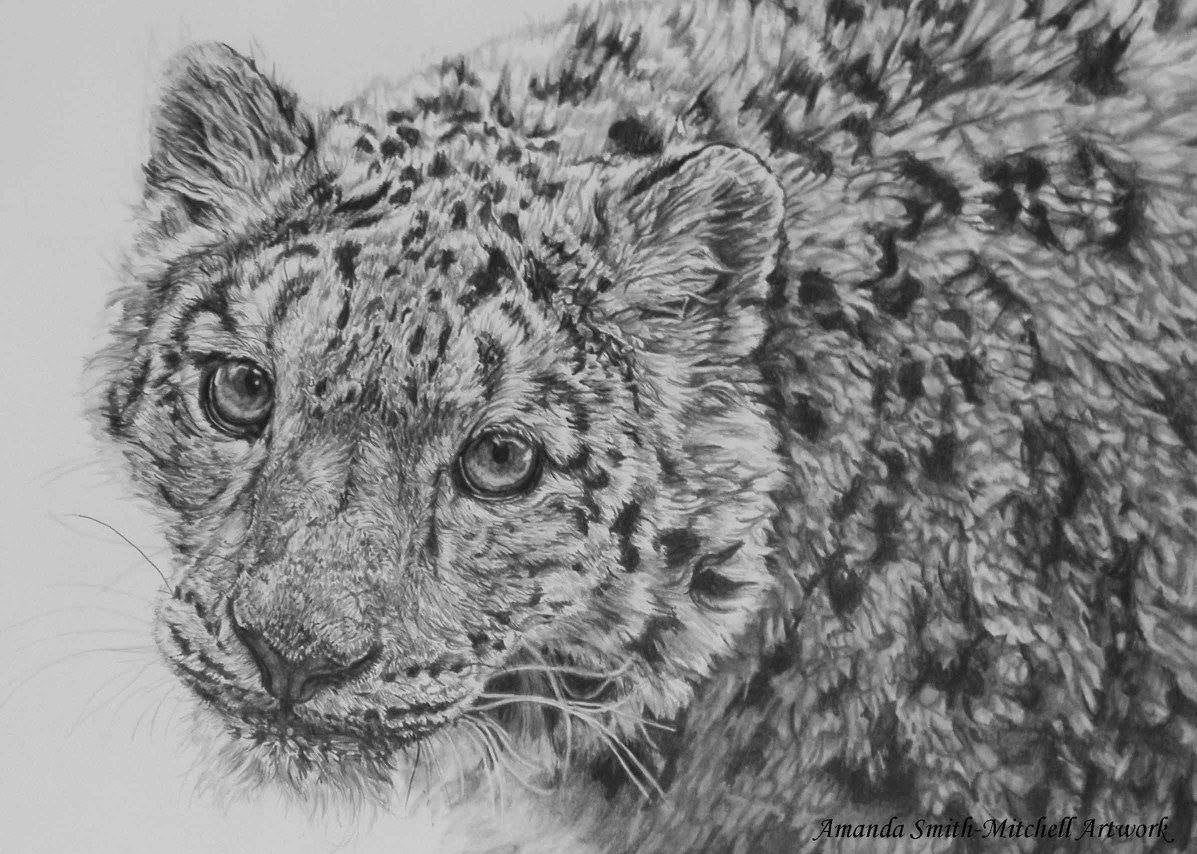 snow leopard drawing design stack a blog about art design and architecture drawing leopard snow