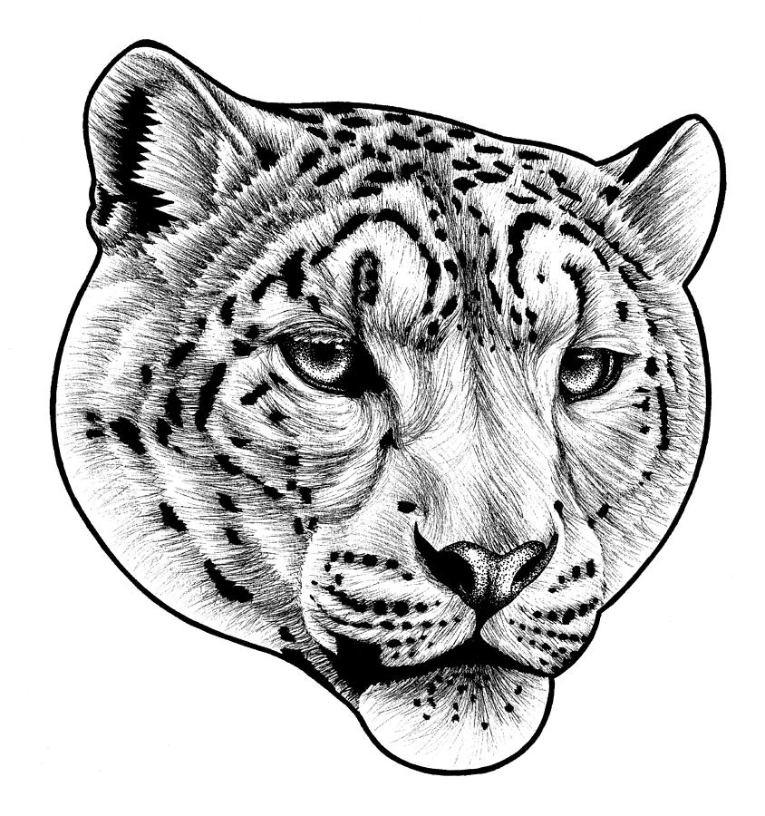 snow leopard drawing leopard drawing at getdrawings free download snow leopard drawing