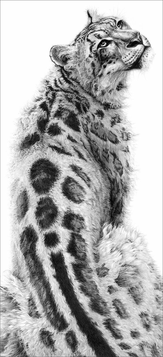 snow leopard drawing snow leopard by dhekalia on deviantart with images leopard drawing snow