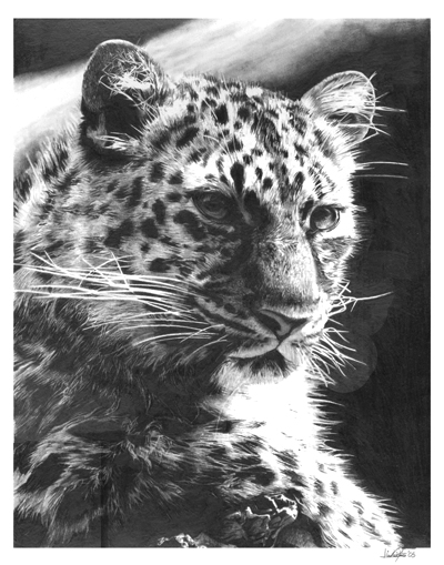 snow leopard drawing snow leopard drawing by jessica crabtree drawing snow leopard