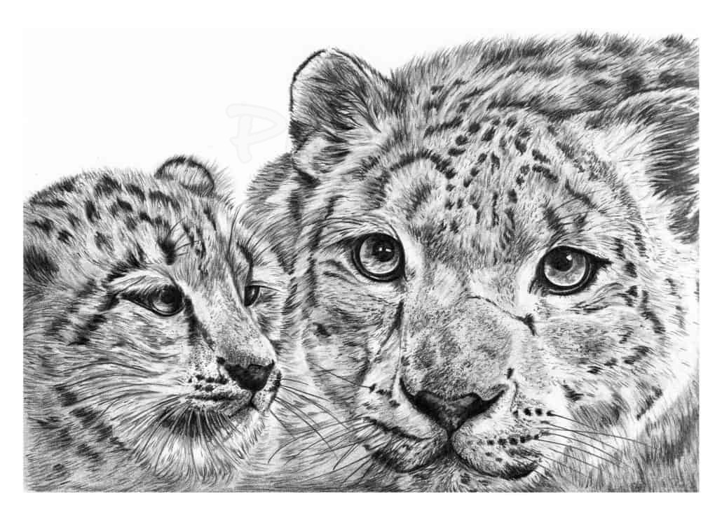 snow leopard drawing snow leopard pencil graphite print a4 a3 signed by snow leopard drawing