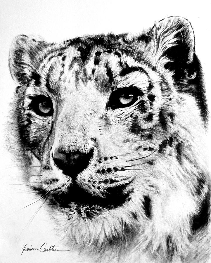snow leopard drawing snow leopard snarl reworked by dhekalia on deviantart snow leopard drawing