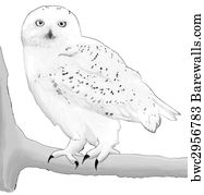 snowy owl pictures to print how to draw a cute snowy owl for kids google search to pictures owl snowy print
