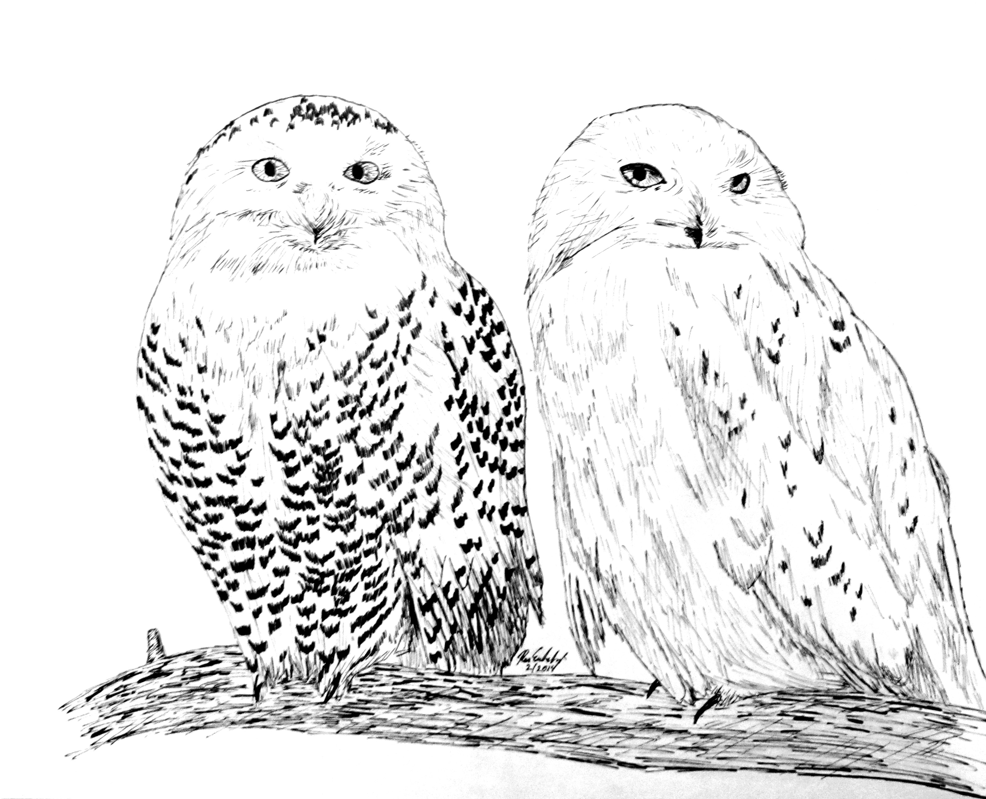 snowy owl pictures to print pencil drawing of a snowy owl by uk artist gary tymon snowy print pictures owl to