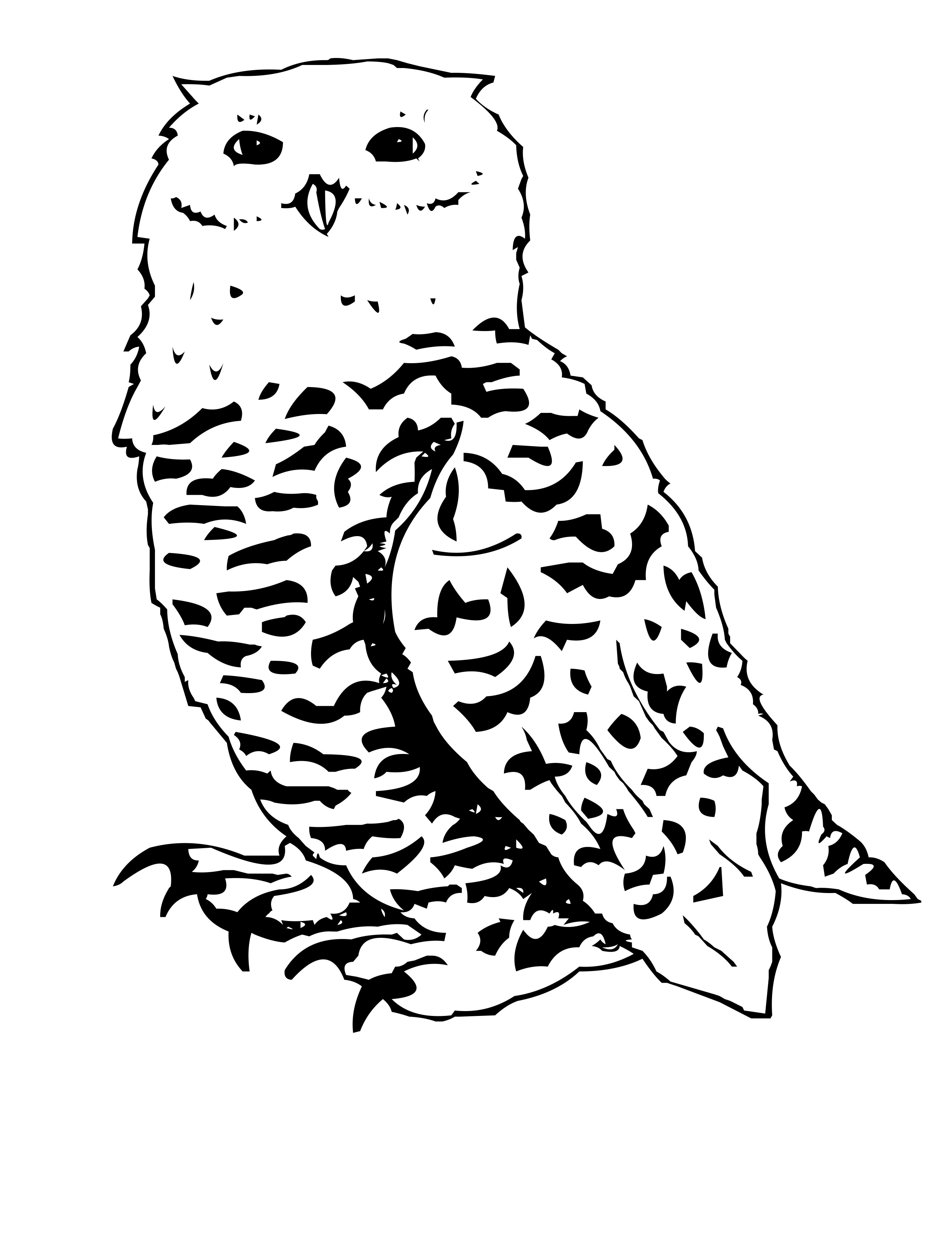 snowy owl pictures to print snowy owl ink illustration ink illustrations owl art print to snowy pictures owl