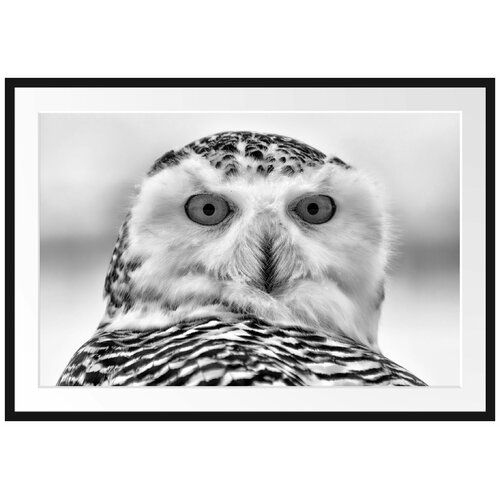 snowy owl pictures to print snowy owl pictures to print print pictures owl snowy to