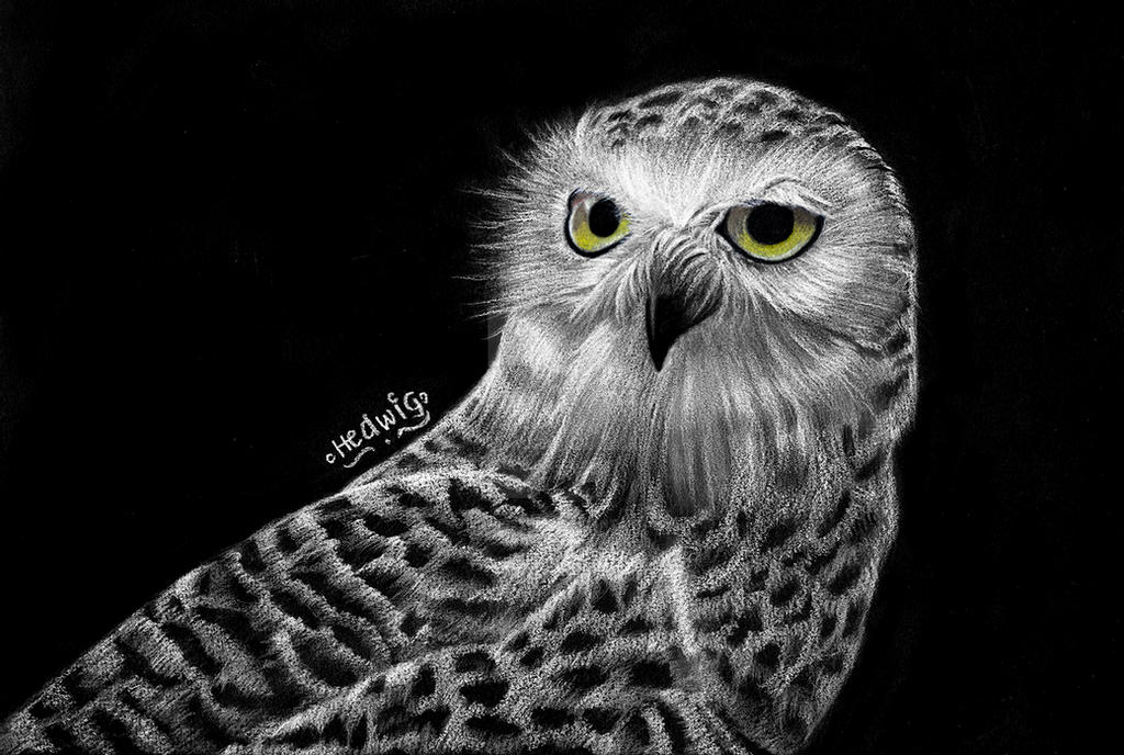 snowy owl pictures to print snowy owl poster print zazzle owl to snowy pictures print