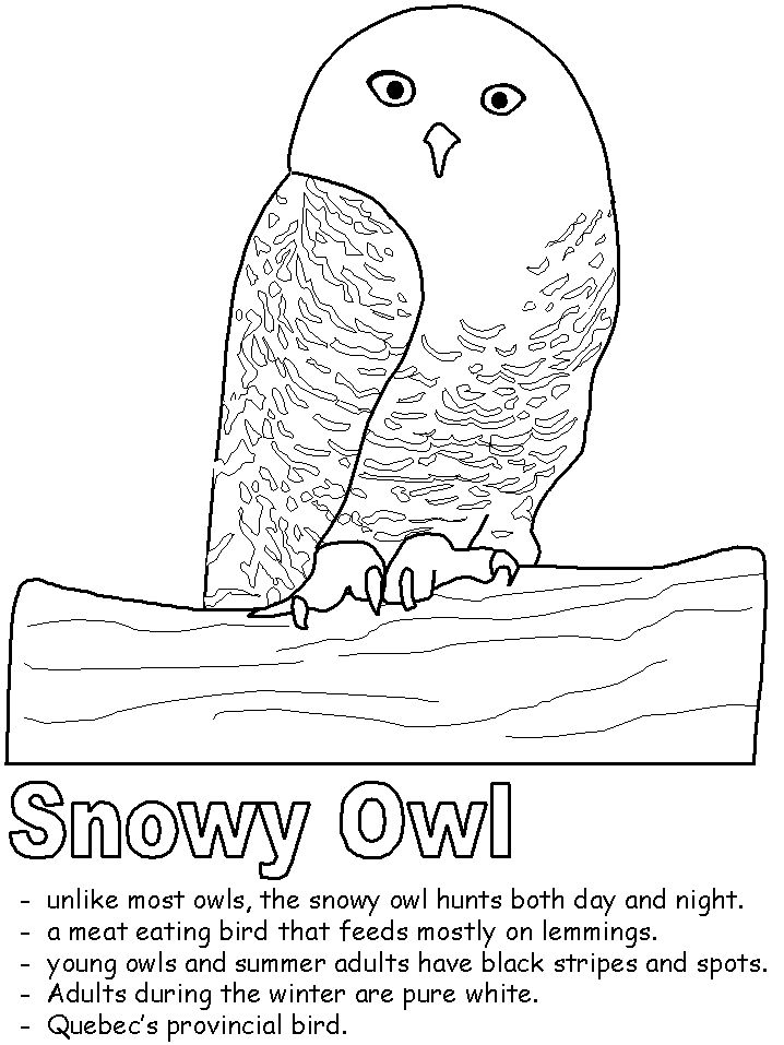 snowy owl pictures to print snowy owl poster print zazzle snowy owl to pictures print