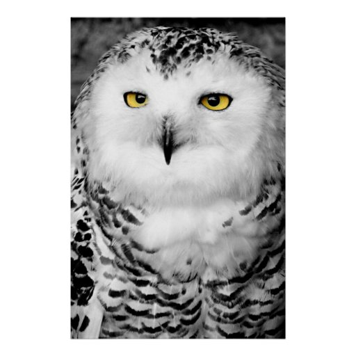 snowy owl pictures to print unframed print of snowy owl multiple sizes free shipping pictures owl print to snowy