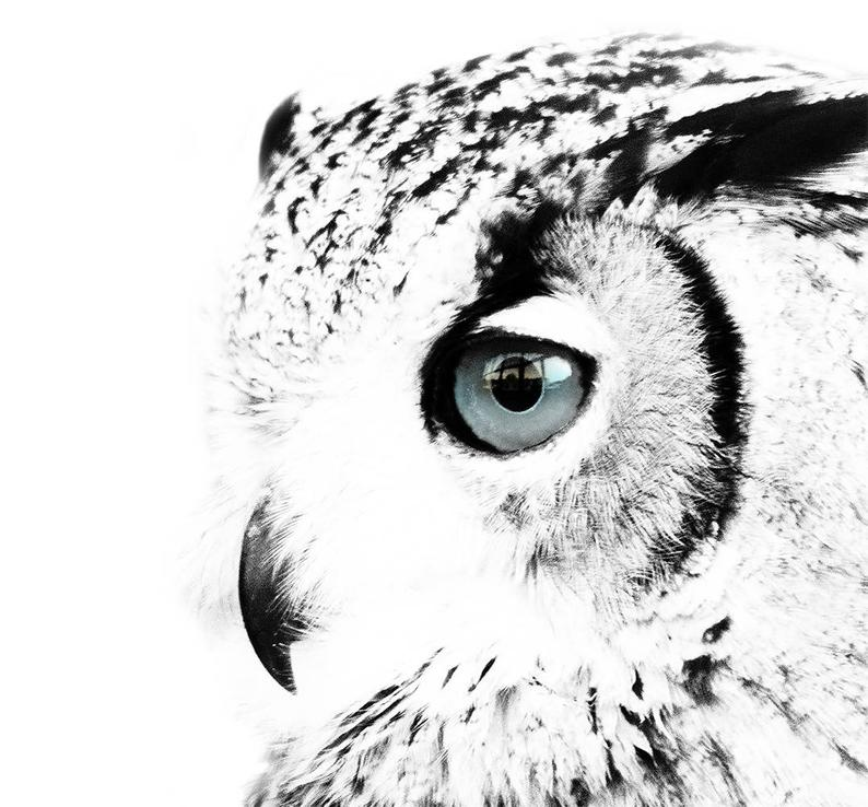 snowy owl pictures to print white on black snowy owl by hedwigstudio on deviantart print to pictures owl snowy