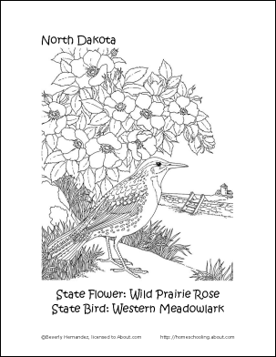 south dakota state flower pictures 50 state flowers coloring pages for kids pictures south flower dakota state