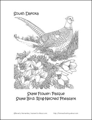 south dakota state flower pictures north dakota state flower coloring page wild prairie dakota flower state south pictures