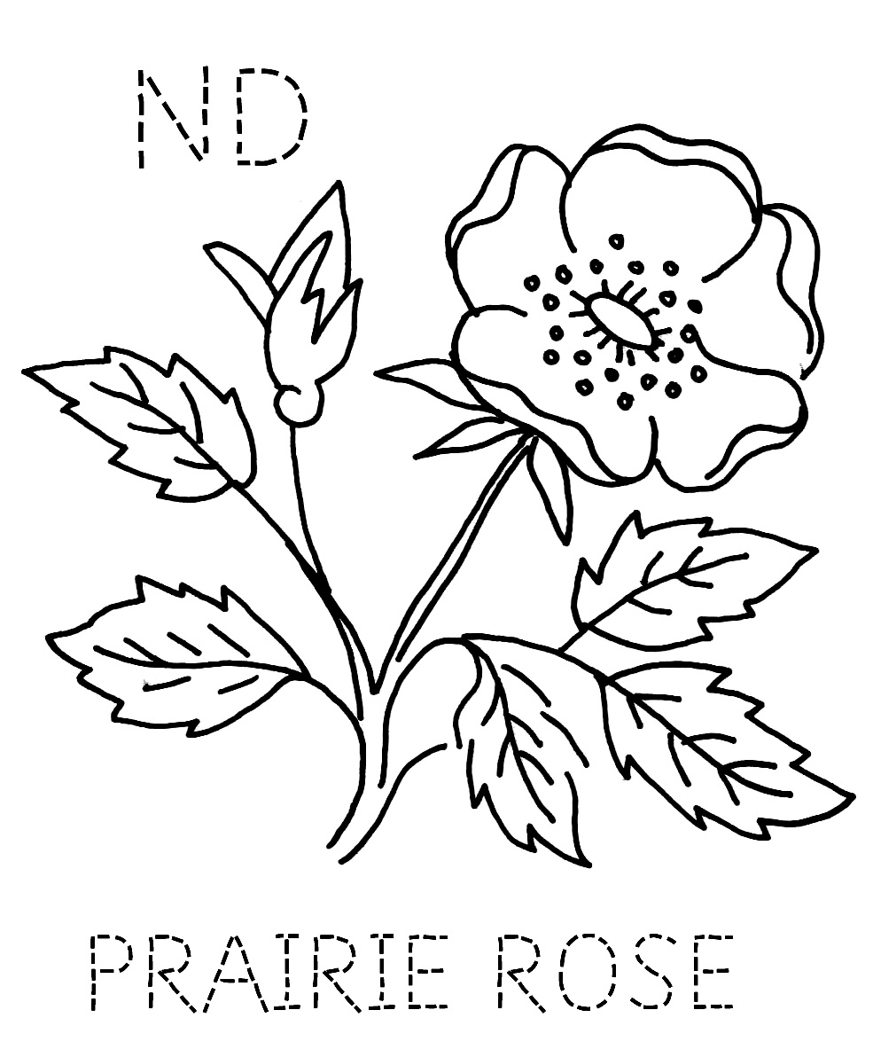 south dakota state flower pictures pasque flower clipart 20 free cliparts download images dakota state pictures south flower