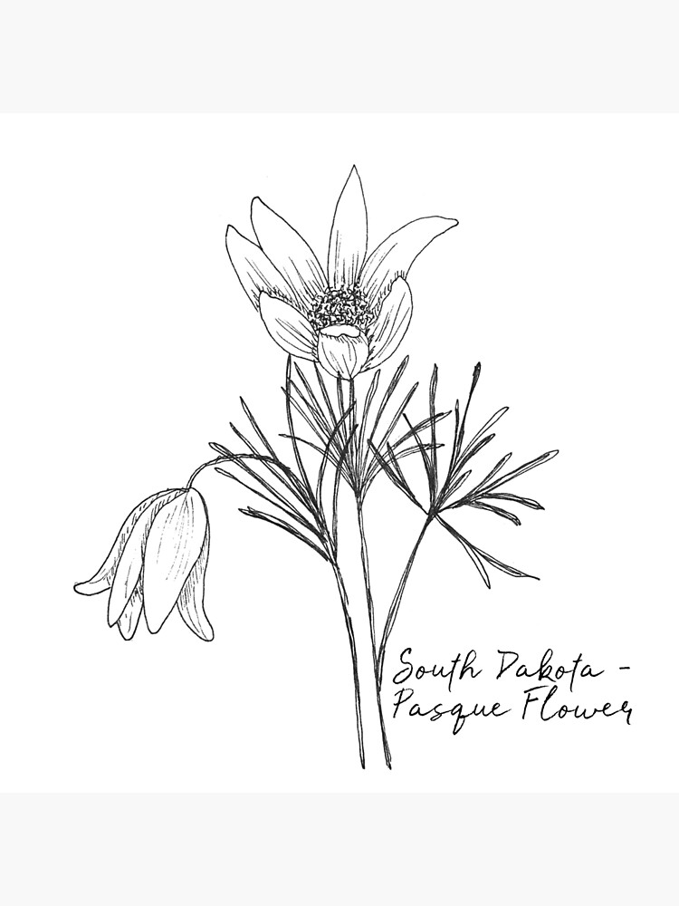 south dakota state flower pictures south dakota pasque flower to download the 6 inch block pictures south flower state dakota