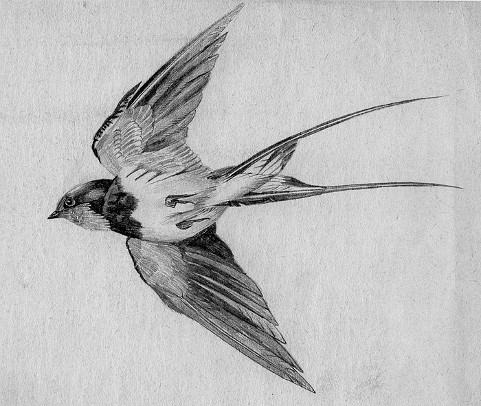 sparrow drawing 2 cute vintage bird images sparrow on branch nest with sparrow drawing