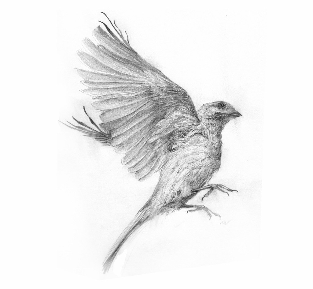 sparrow drawing flying sparrow sketch at paintingvalleycom explore drawing sparrow