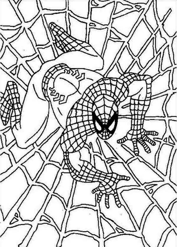 spiderman web coloring pages 19 spider man coloring pages pdf psd free premium web spiderman coloring pages