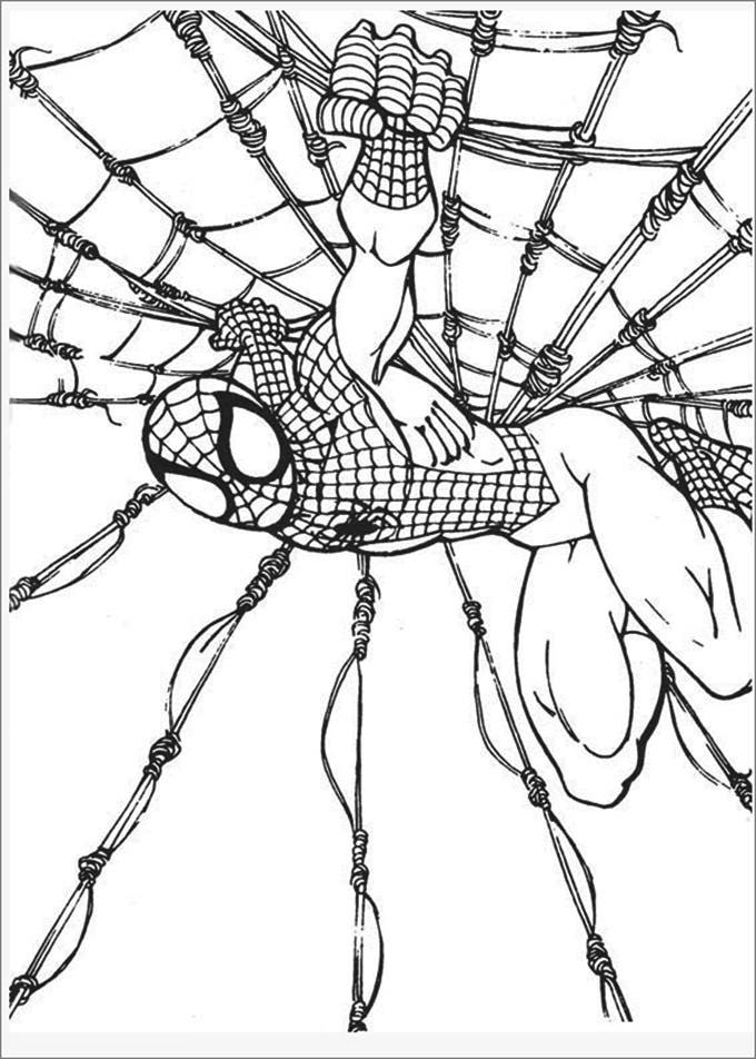 spiderman web coloring pages coloring pictures of spiderman pictures gallery show spiderman web pages coloring