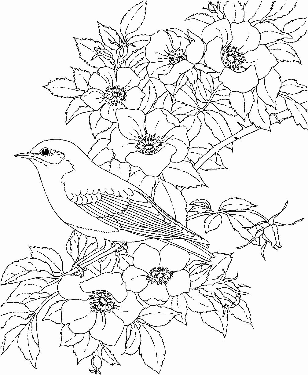 spring birds coloring pages bird coloring pages bird coloring pages spring coloring birds spring pages coloring