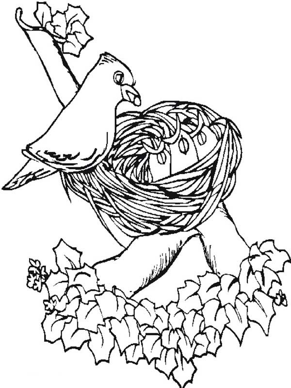 spring birds coloring pages pin by lynda reid on coloring pages with images bird coloring spring pages birds