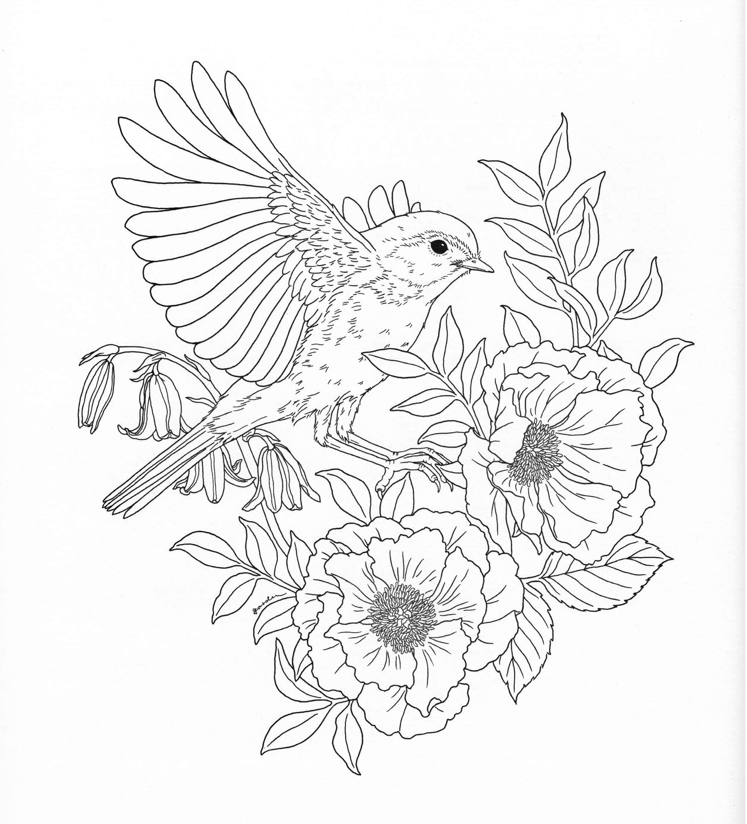spring birds coloring pages spring birds pages adult coloring pages spring pages birds coloring