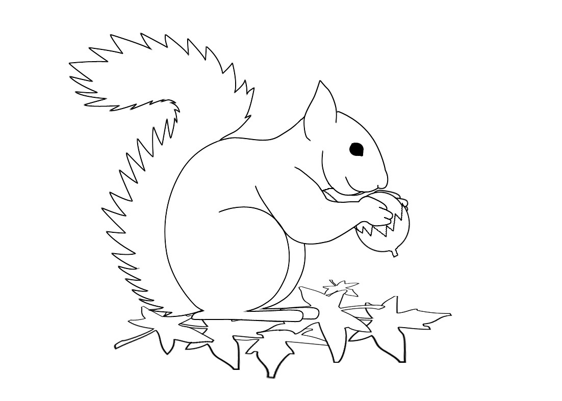 squirrel colouring a call to artists can you draw a squirrel josh mosey colouring squirrel