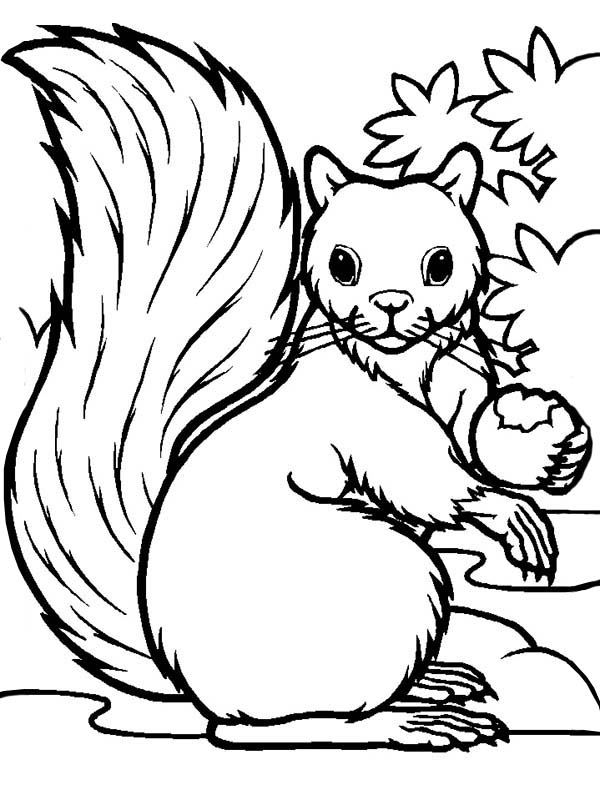 squirrel colouring free printable squirrel coloring pages for kids animal place colouring squirrel