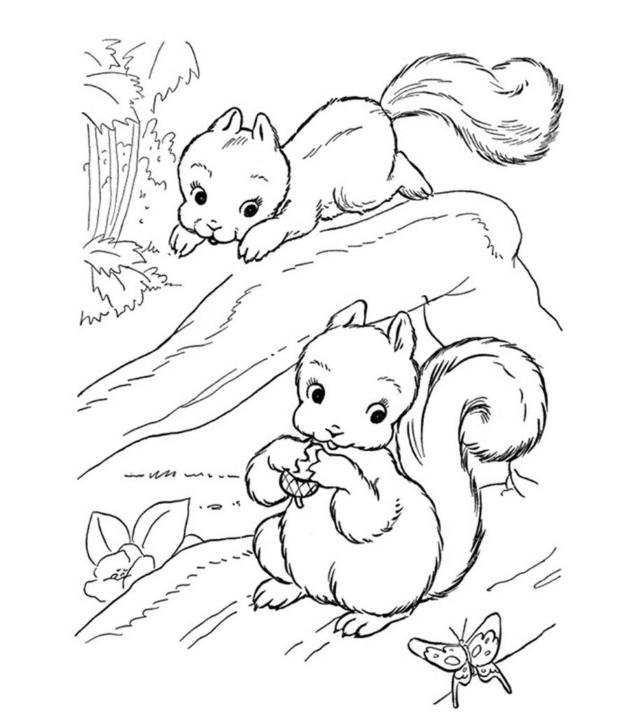 squirrel colouring free squirrel coloring pages for adults printable to squirrel colouring