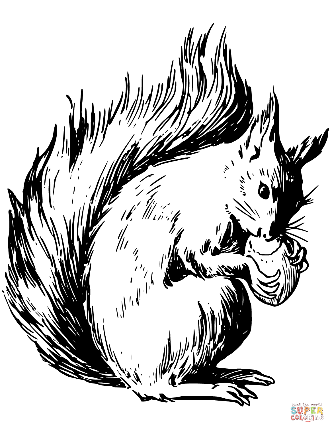 squirrel colouring hungry squirrel eating coloring page download print squirrel colouring