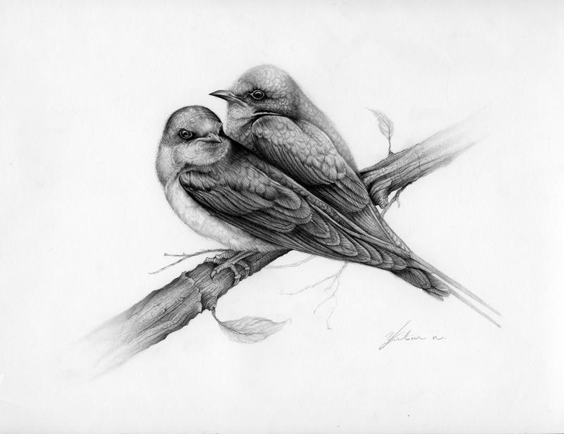 swallow drawing swallow by facepolution on deviantart swallow drawing