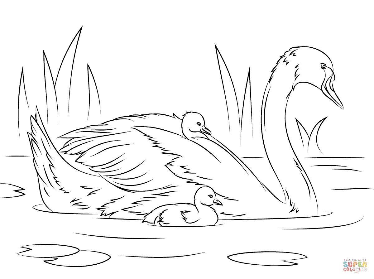 swan coloring pages baby animal coloring pages swan printable coloring pages swan coloring pages