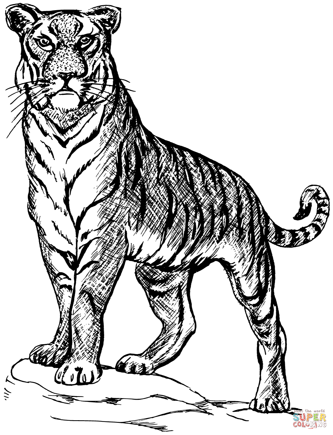 tiger pictures to color tiger coloring pages to tiger pictures color