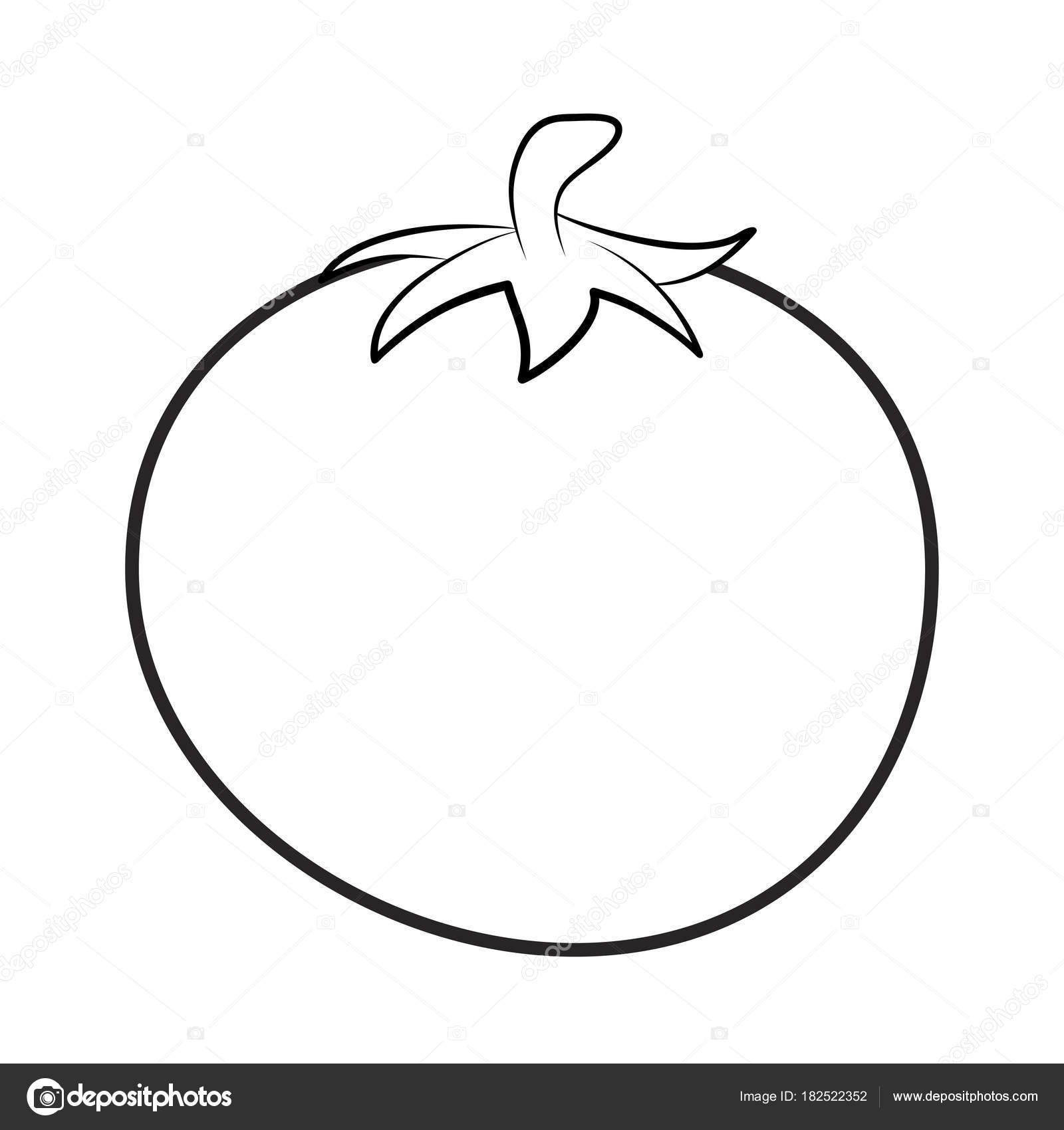 tomato outline tomato outline for colouring book isolated on white tomato outline