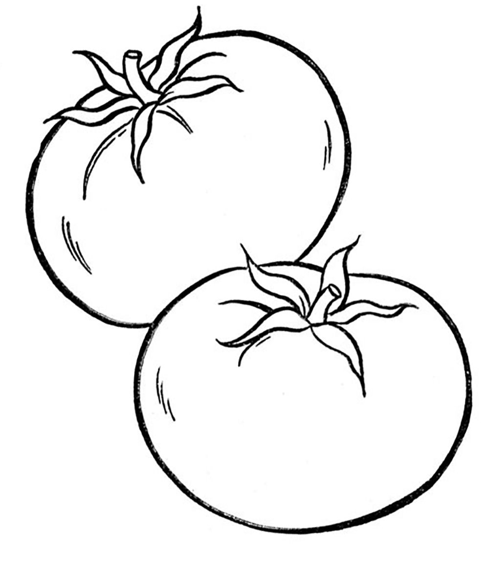 tomatoes coloring pages tomato plant drawing clipart best coloring tomatoes pages