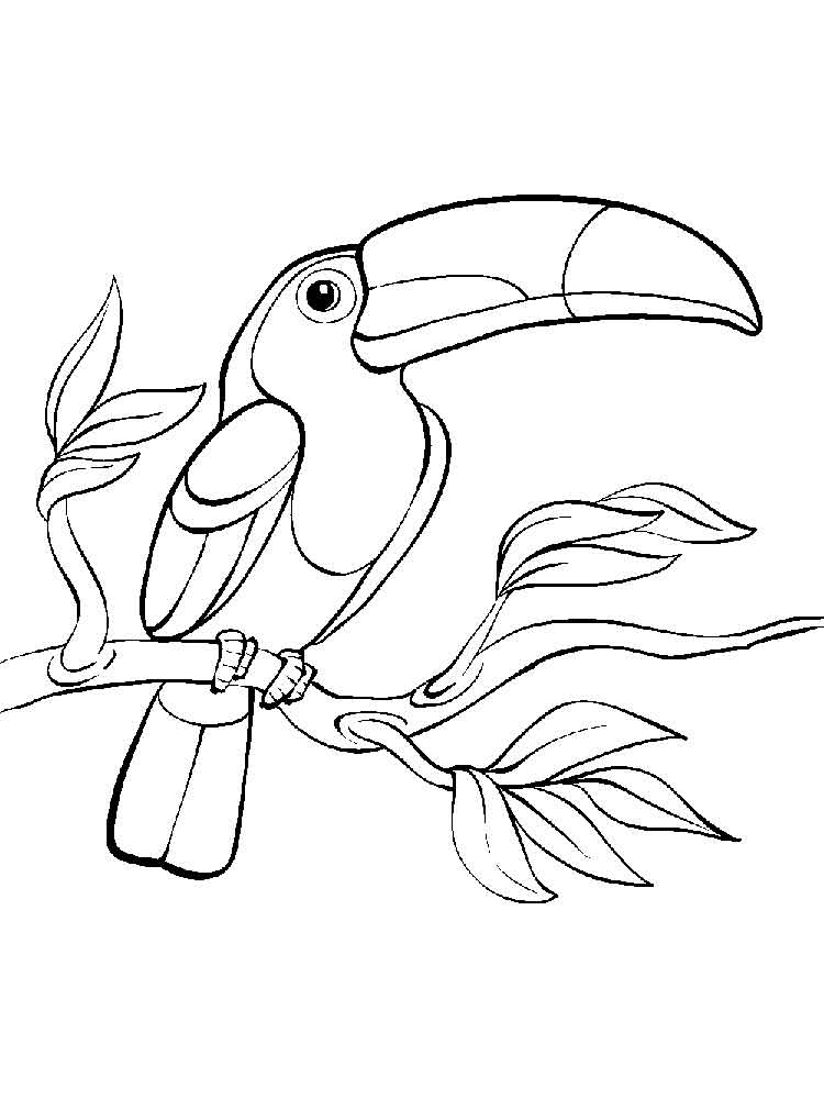 toucan coloring a toucan coloring page free printable coloring pages for coloring toucan