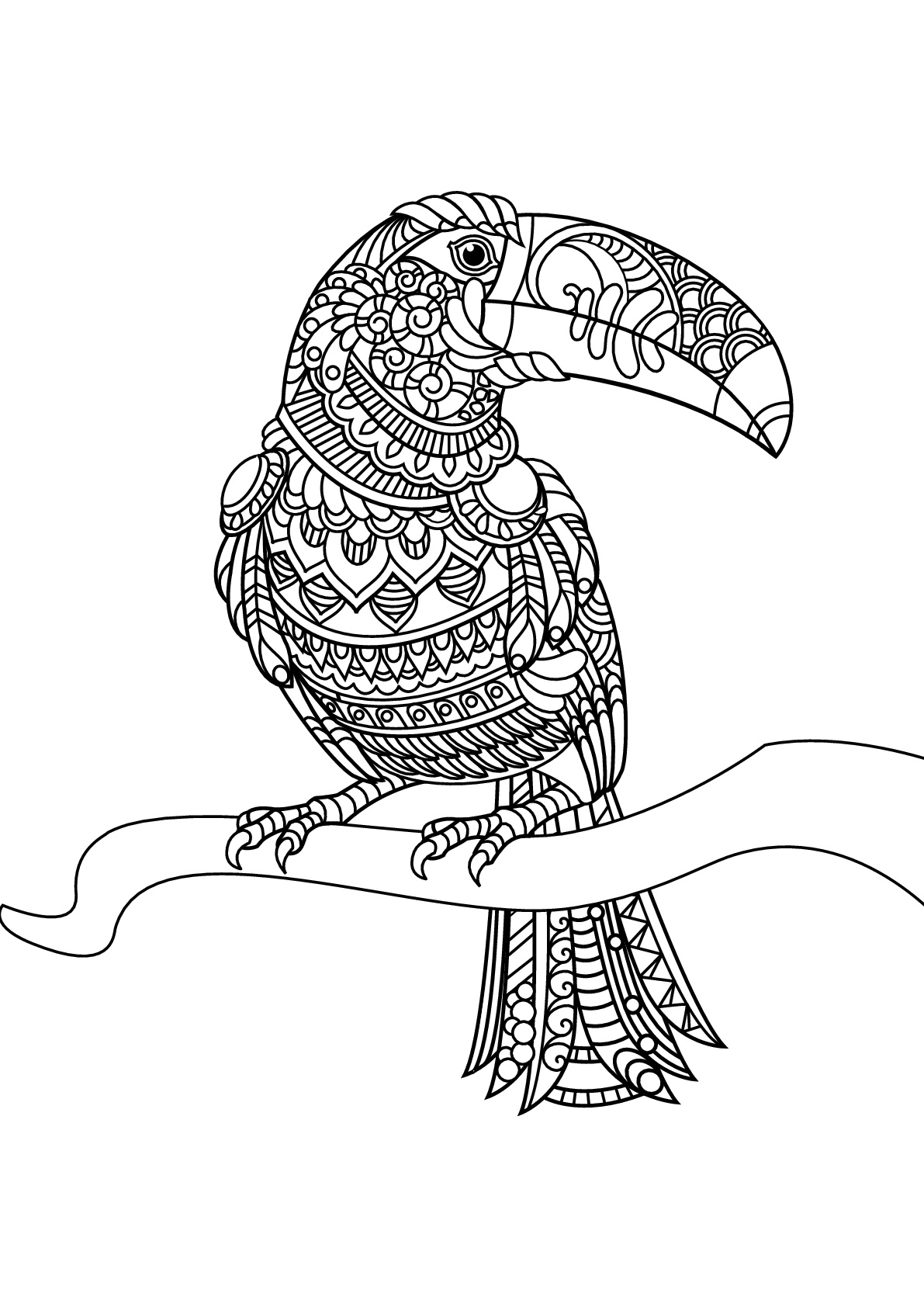 toucan coloring best toco toucan illustrations royalty free vector coloring toucan