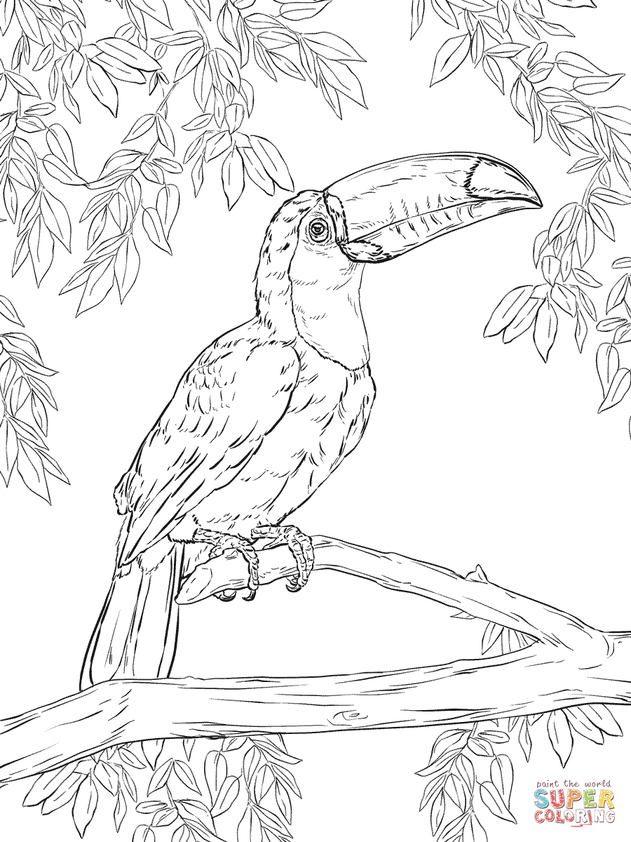 toucan coloring free toucan coloring pages coloring toucan