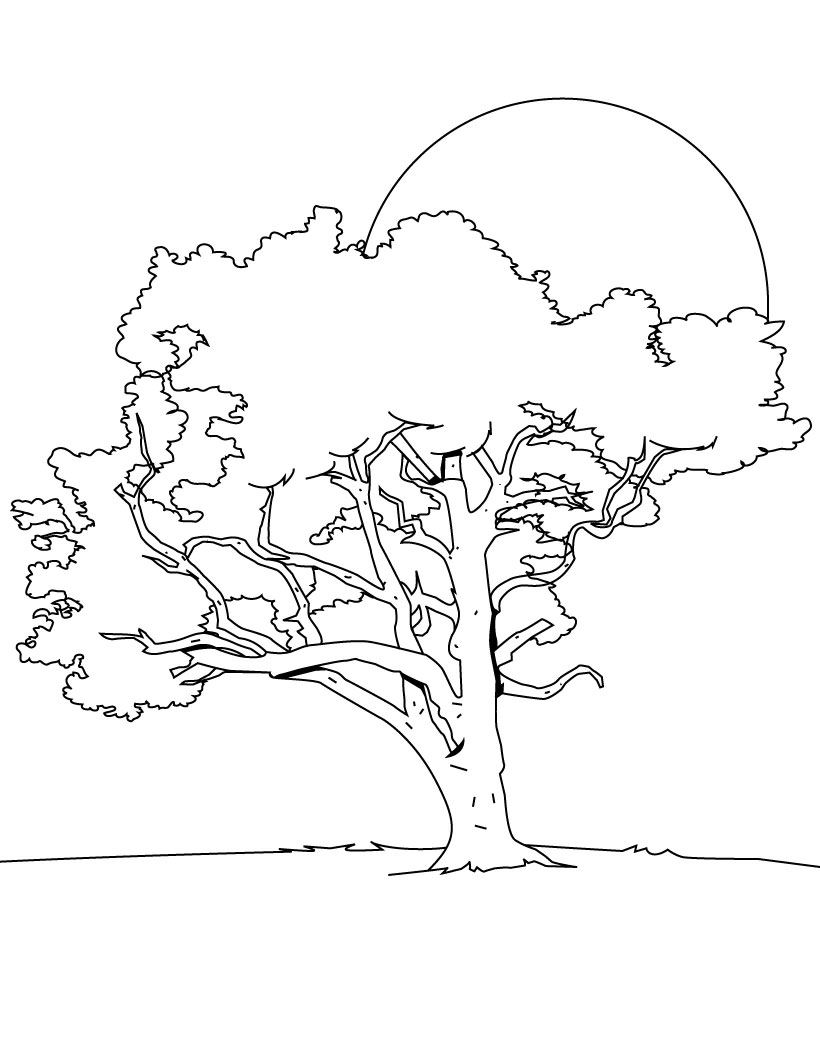 tree to color tree coloring pages coloring pages to print color tree to