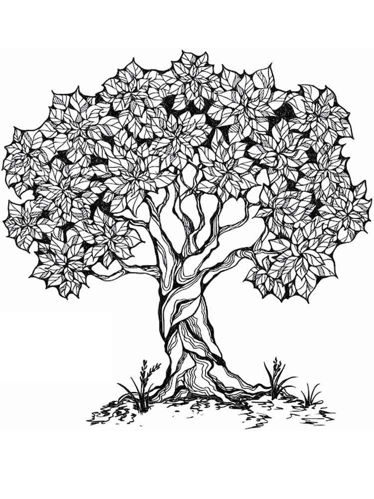 tree to color tree coloring pages for adults free printable tree to tree color
