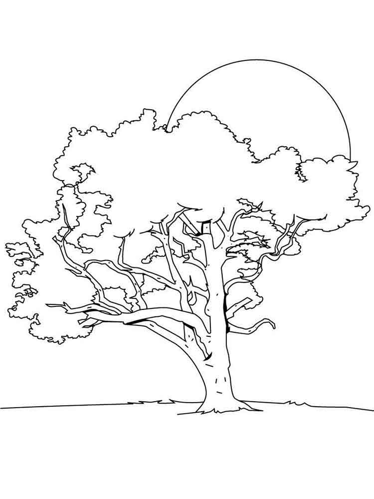 tree with leaves coloring pages elm tree coloring pages at getcoloringscom free coloring tree pages leaves with
