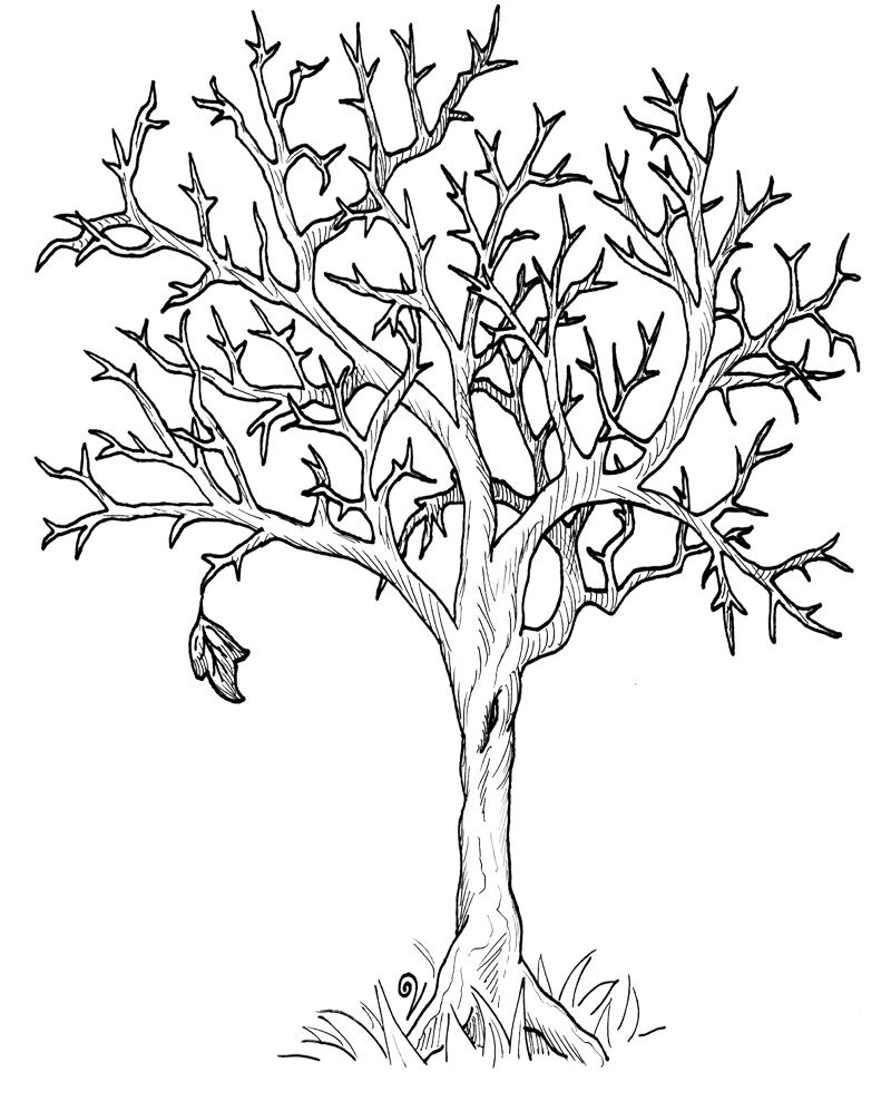 tree with leaves coloring pages maple tree branch with maple leaf coloring page kids with leaves pages tree coloring