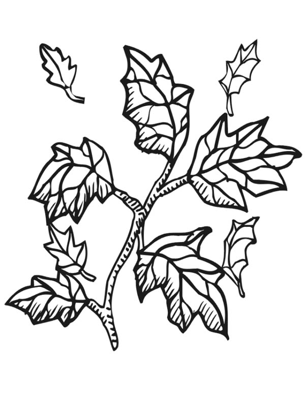 tree with leaves coloring pages printable tree without leaves coloring page sketch pages tree coloring with leaves