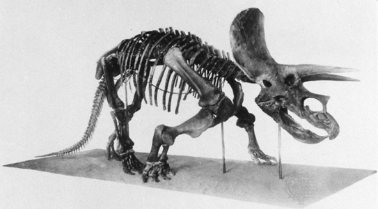 triceratop rebor scout series triceratops baby hazelnut 135 scale triceratop