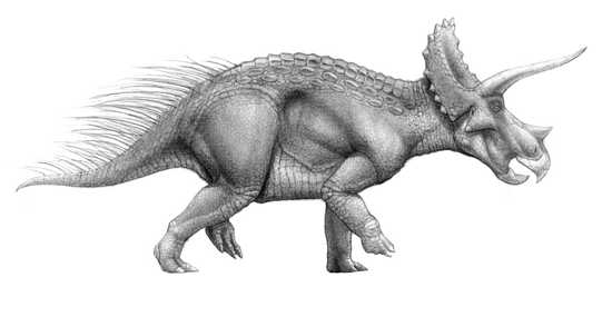 triceratop top 10 dinosaurs that aren39t what they were listverse triceratop