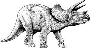 triceratop triceratops description size fossil diet facts triceratop