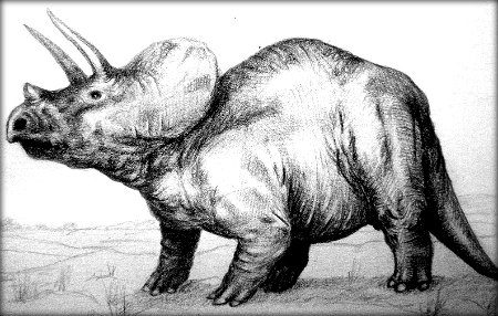 triceratop triceratops facts and information primary facts triceratop