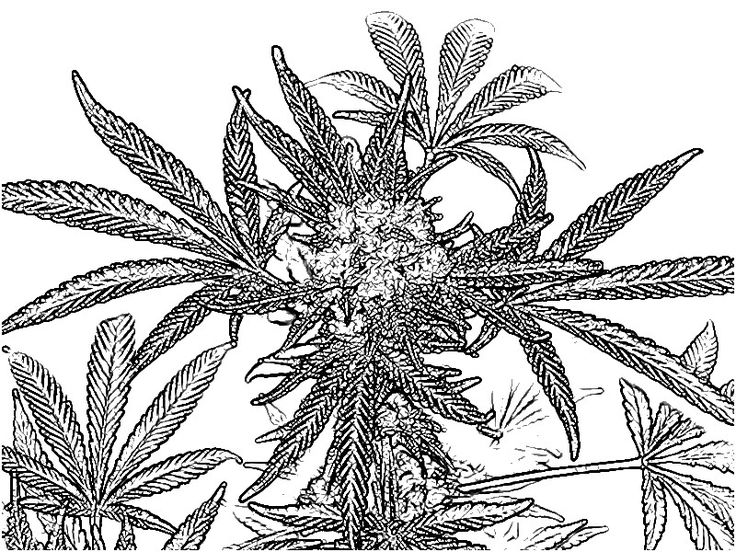 trippy pot leaf coloring pages pin on stoner coloring pages pages leaf pot coloring trippy