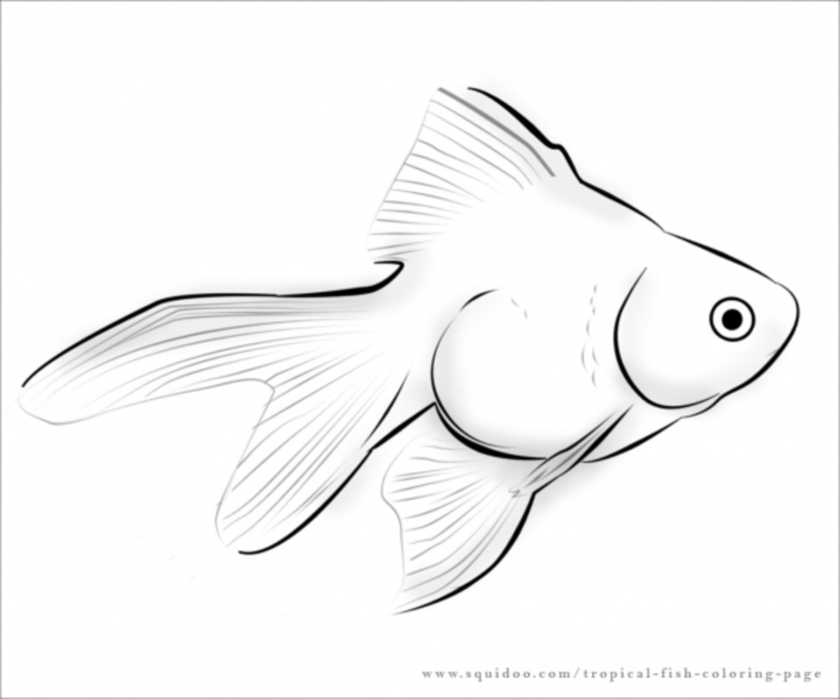 tropical fish coloring pages printable goldfish coloring pages for kids cool2bkids tropical fish coloring pages