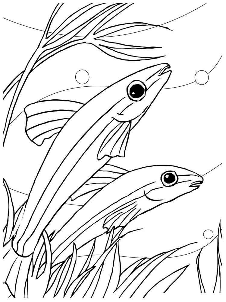 tropical fish coloring pages realistic tropical fish coloring pages clipart panda pages coloring tropical fish
