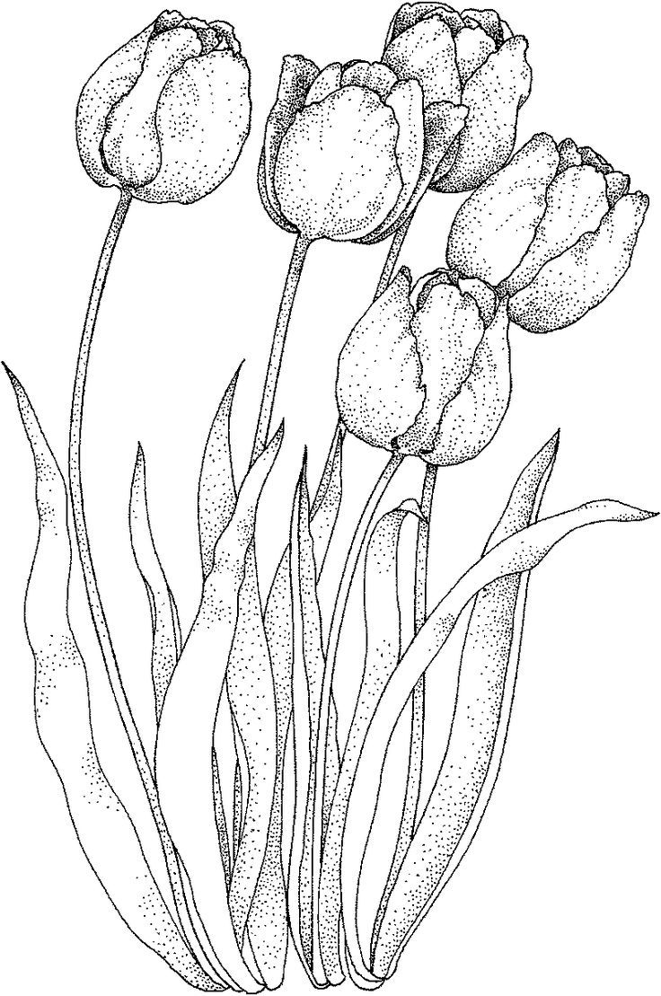 tulip drawing simple collection of free outline drawing tulip download on drawing tulip simple